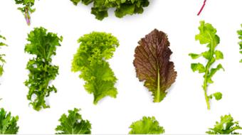 上野原野菜辞典